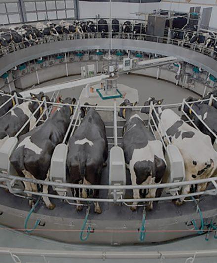 Soluciones completas para los productores lecheros de hoy…