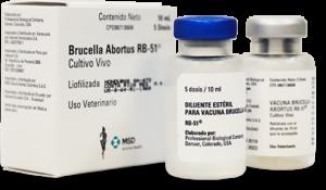 Brucella Abortus RB51